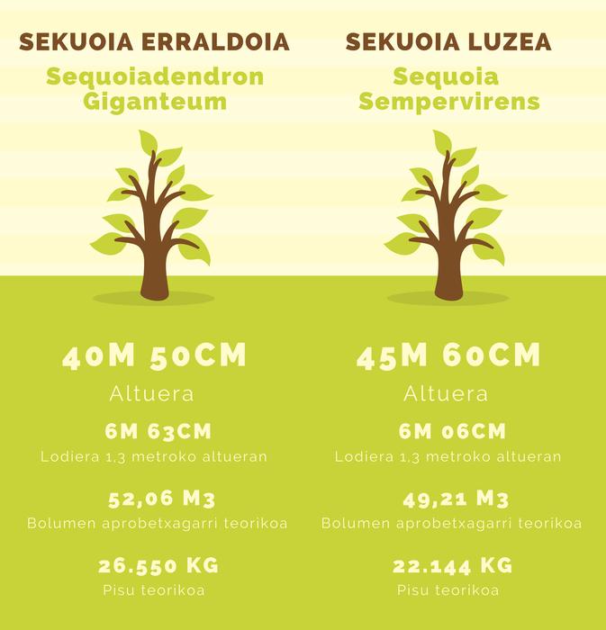 Monterron sekuoia infografia