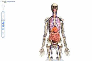 Google Body Browser: gizakiaren anatomia hiru dimentsiotan