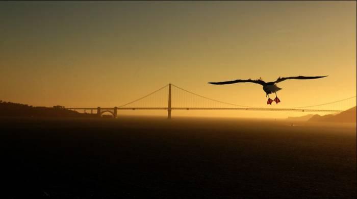 San Franciscon harrapatutako une berezia da Goienaren Udako Argazkien X. Goiena Lehiaketako irudia