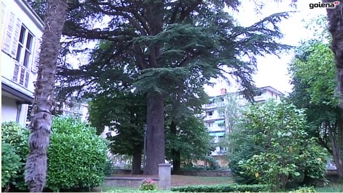 145 urte ditu udaletxeko lorategiko zedroak eta hazten jarraitzeko baldintza ezin hobeak