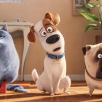 'Mascotas 2' filma, gaztetxoendako