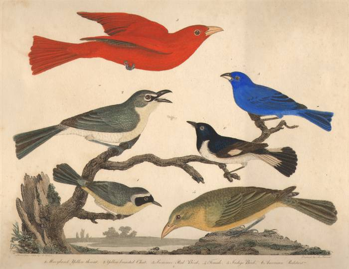 Ornitologia ekintzak egingo dituzte urrian Laboratoriumen