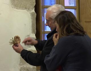 Amoniteen erakusketa ikusgai Ibarraundi museoan