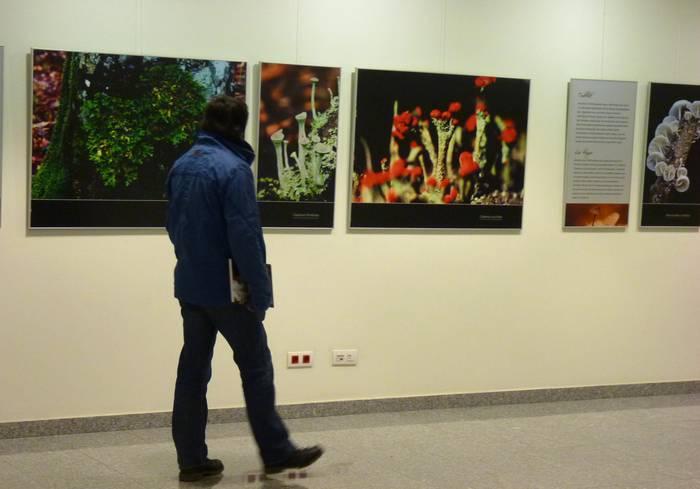 Basoko landaretzako izaki ezezagunak hobeto ezagutzeko erakusketa Arkupen