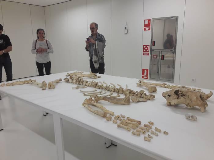 Arrikrutzeko lehoia San Telmo museoan egongo da ikusgai