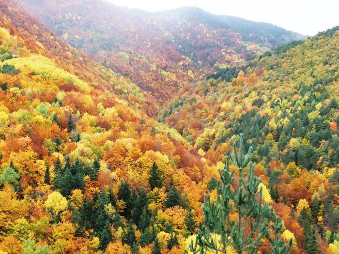 Udazkena: paisaia aldatzen da eta aldartea ere alda daiteke