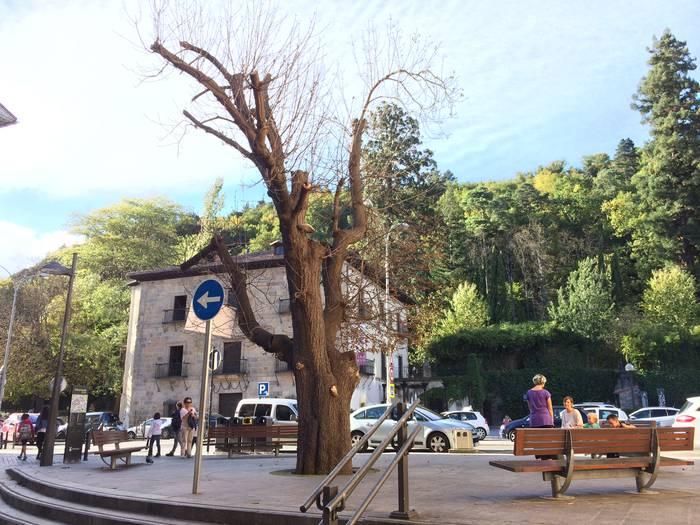 Eguazten goizean botako dute Arbolapetako gaztainondoa