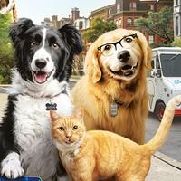 'Como perros y gatos' pelikula