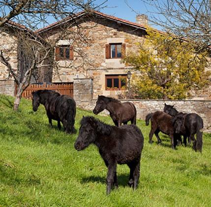 567789 Zubillaga Hiltegia argazkia (photo)