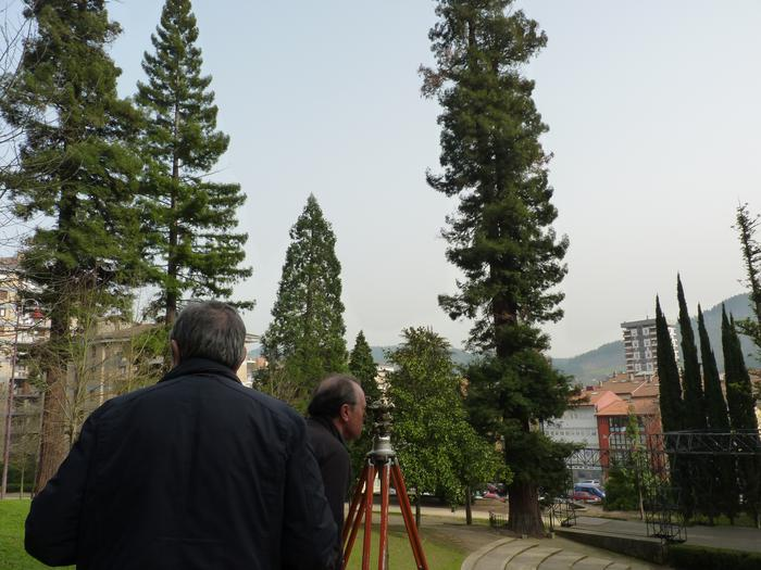 Monterrongo sekuoia altuenak 45 metro