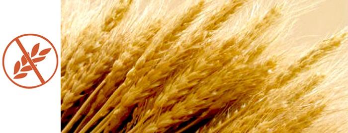 Glutenik gabeko jaialdia maiatzaren 26an, Bergaran