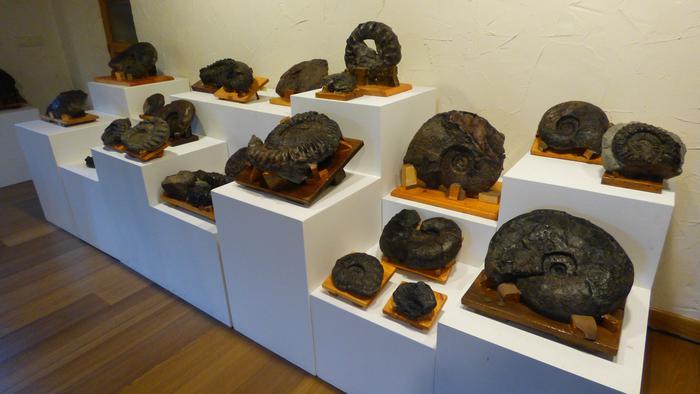 'Narvaez' bildumako fosilen erakusketa ikusgai Ibarraundin