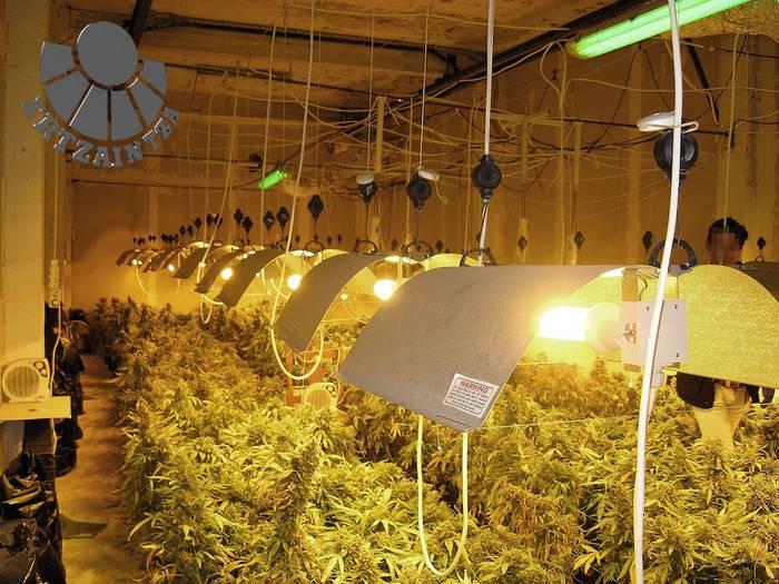 1.750 marihuana-landare konfiskatu dituzte Bergaran
