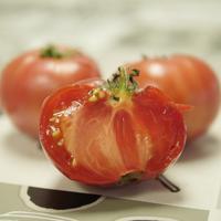 Tomatearen Astea: Haziak lortzeko tailerra