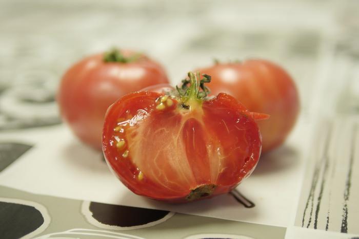 Tomateari buruzko tailerra
