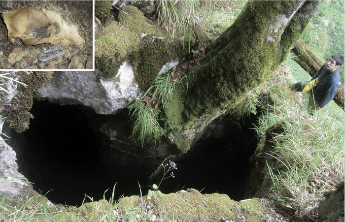 Aloña Mendi taldeak hartz arre baten garezurra aurkitu du, oso-osorik