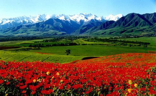 Antzuolarrak munduan zehar: Kyrgyzstan - Txina (Zetaren bidetik)