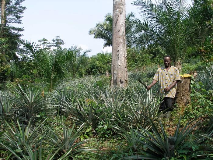 Ekuatore Ginean nekazal ekoizpena hobetzea du helburu Hiruatxek